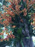 Orkidér på trädstammen Arkivbild
