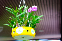 Orkidér som är fullvuxna i keramiska krukor som hänger i coffee shop Royaltyfria Bilder