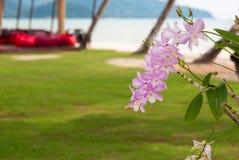 Orkidérosa färger på gömma i handflatan Royaltyfri Fotografi
