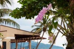 Orkidérosa färger på gömma i handflatan Arkivfoto