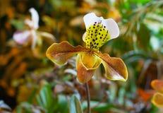 Orkidérovdjur i rainforesten Arkivbilder