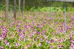 Orkidéträdgård arkivbild