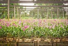 Orkidéträdgård arkivfoto