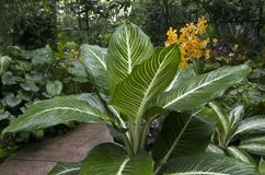 Orkidéträdgård fotografering för bildbyråer