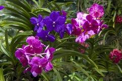 Orkidéträdgård royaltyfria foton