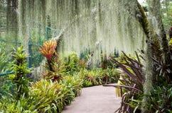 Orkidéträdgård, del av botaniska trädgårdar i Singapore Royaltyfria Bilder