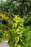 Orkidéträdgård, del av botaniska trädgårdar i Singapore Arkivfoton