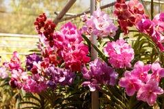 Orkidéträdgård nära Chang Mai, Thailand nytt Colorful-2 royaltyfri bild