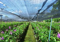 Orkidéväxtbarnkammare Arkivbilder
