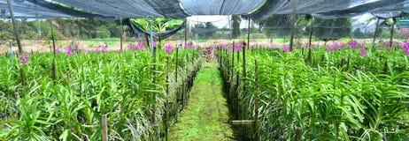 Orkidéväxtbarnkammare Royaltyfria Bilder