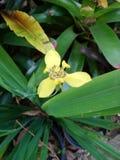 Orkid?blomman royaltyfria foton