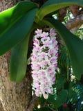 Orkid?blomman royaltyfri bild