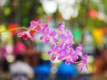 orkid rosa Fotografia Stock