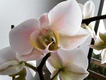 Orkid? arkivbilder