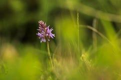 Orkide Zdjęcia Stock