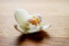 Orkidflower Стоковые Фото