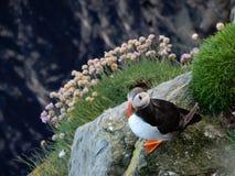 orkney Стоковое Изображение