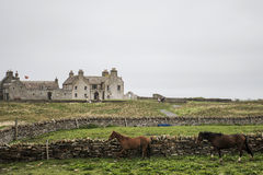 Orkney coastline house with horses Skara Brae Stock Image