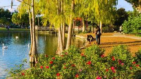 Orlando del centro, il lago Eola ed il parco archivi video