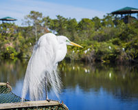 ORLANDO FL- January 23, 2014 - Gatorland Theme Par Royalty Free Stock Photo