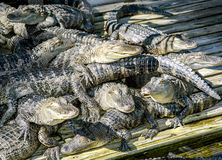 ORLANDO FL- January 23, 2014 - Gatorland Theme Park in Orlando Florida Royalty Free Stock Photos