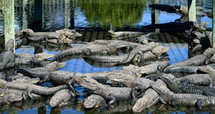 ORLANDO FL- January 23, 2014 - Gatorland Theme Park in Orlando Florida Stock Image