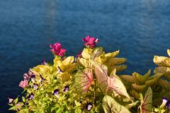 Colorful flowers on blue lake background. royalty free stock photo