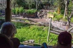 Kilimanjaro Safaris at Animal Kingdom at Walt Disney World. Orlando, Florida: December 1, 2017:  Kilimanjaro Safaris at Animal Kingdom at Walt Disney World.  The Stock Image