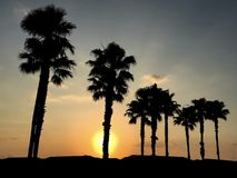 Orlando Florida golden sunrise behind silhouetted palm trees stock images