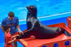 Little boy taking Sealion fin, guided by coach at Seaworld. Orlando, Florida. January 01, 2019 .Little boy taking Sealion fin, guided by coach at Seaworld stock photography