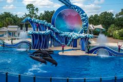 Dolphins jumping in Touch the Sky Show by Electric Ocean at Seaworld 4. Orlando, Florida. June 23  2019. Dolphins jumping in Touch the Sky Show by Electric Ocean royalty free stock photos