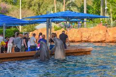 Bottlenose dolphins jumping at Seaworld in International Drive area 1. Orlando, Florida. March 09 2019. Bottlenose dolphins jumping at Seaworld in International stock photo