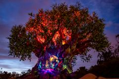 Panoramic view of Illuminated Tree of Life on blue night background at  Animal Kingdom in Walt Disney World area 2