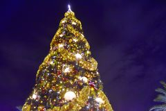 Top view Christmas Tree on dark blue night background in Lake Buena Vista area. Orlando, Florida. November 18 , 2018 Top view Christmas Tree on dark blue night royalty free stock photo