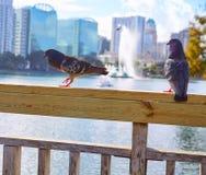 Orlando skyline fom lake Eola Florida US Stock Image