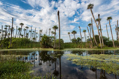 Orlando Wetlands. Park Panorama with a reflection during a cloudy day stock photography