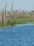 Orlando Wetlands stock photo
