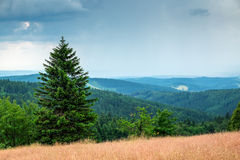 Orlicke mountains in summer Stock Photography