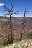 Orlo del nord del grande canyon Fotografia Stock Libera da Diritti