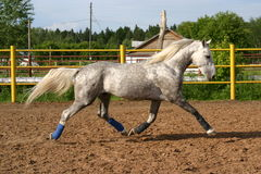 Free Orlov Trotter On The Move Royalty Free Stock Image - 903206