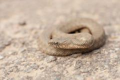 Orm i en ställing Royaltyfri Foto