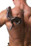Orm på baksida och skuldra av den nakna muskulösa mannen Royaltyfria Bilder
