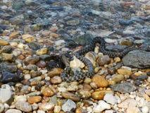 Orm på banken av floden royaltyfri foto