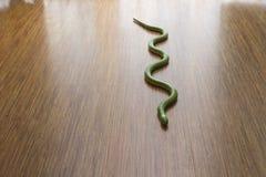 Orm på golvet Arkivfoton