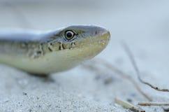Orm på stranden Arkivfoto
