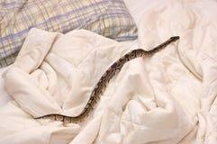 Orm på täcke Fotografering för Bildbyråer