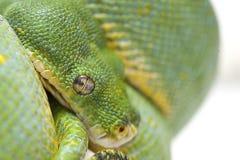 Orm som isoleras på vit Arkivfoto