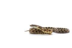 Orm som isoleras på vit Arkivfoton