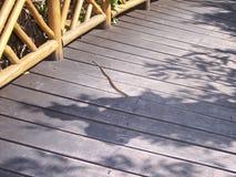 Orm som klibbar ut ur en träbro royaltyfri bild