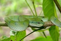 Orm som väntar på ett rov Arkivfoto